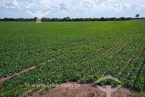 Assunto: Plantação de feijão / Local: Luís Eduardo Magalhães - Bahia (BA) - Brasil / Data: 07/2013