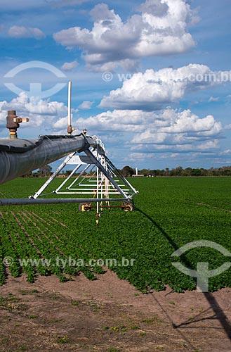 Assunto: Irrigação com pivô central em plantação de feijão / Local: Luís Eduardo Magalhães - Bahia (BA) - Brasil / Data: 07/2013