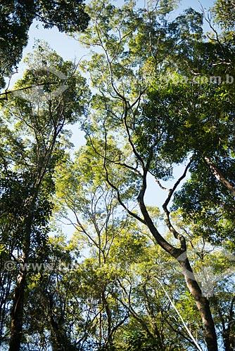 Assunto: Árvores na Floresta da Tijuca / Local: Rio de Janeiro (RJ) - Brasil / Data: 08/2013