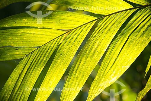 Assunto: Detalhe de folha no Jardim Botânico do Rio de Janeiro / Local: Jardim Botânico - Rio de Janeiro (RJ) - Brasil / Data: 08/2013