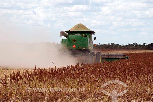 Assunto: Colheita de Sorgo (Sorghum bicolor L. Moench) na zona rural do distrito de Roda Velha / Local: São Desidério - Bahia (BA) - Brasil / Data: 07/2013