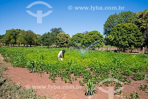 Assunto: Plantação de milho e feijão em Val da Boa Esperança - região onde foi encontrada a terceira reserva mundial de Tálio / Local: Barreiras - Bahia (BA) - Brasil / Data: 07/2013