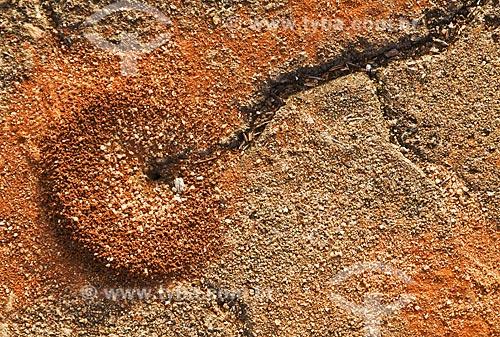 Assunto: Formigueiro em calçada / Local: Boa Esperança - Minas Gerais (MG) - Brasil / Data: 07/2013