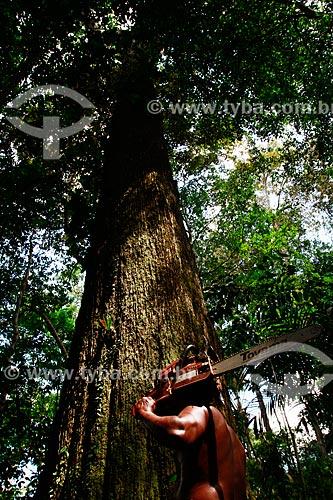 Assunto: Trabalhador com motosserra cortando castanheira na floresta do Rio Ariaú  / Local: Amazonas (AM) - Brasil / Data: 09/2013