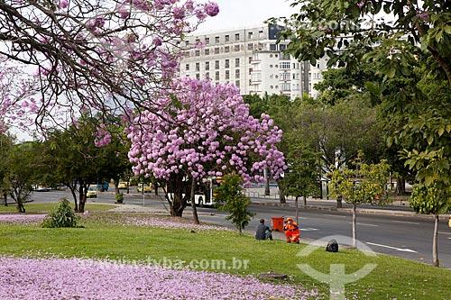 Assunto: Ipê-Rosa (Tabebuia heptaphylla) florido com o Glória Palace Hotel ao fundo / Local: Glória - Rio de Janeiro (RJ) - Brasil / Data: 08/2013