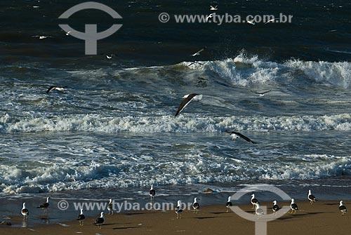 Assunto: Gaivotas na praia / Local: Punta Del Este - Departamento de Maldonado - Uruguai - América do Sul / Data: 09/2013