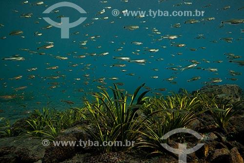 Assunto: Foto subaquática do olho dágua da Urania - nascente de água no sertão da Bahia / Local: Nova Redenção - Bahia (BA) - Brasil / Data: 09/2012