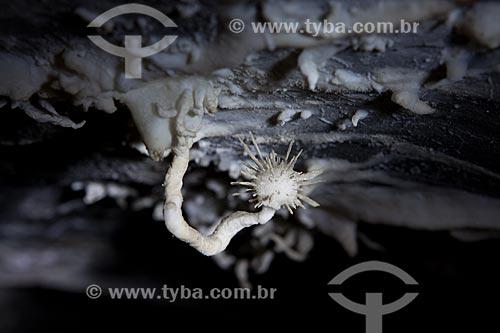 Assunto: Rara formação de flor de aragonita - onde a flor se forma para cima - na Caverna da Torrinha / Local: Iraquara - Bahia (BA) - Brasil / Data: 09/2012