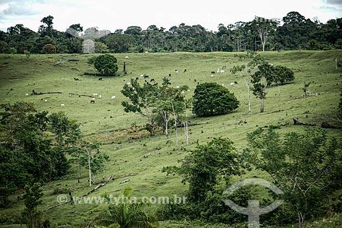 Assunto: Área de pasto no Sítio do Tequinho próximo aos geoglifos / Local: Acre (AC) - Brasil / Data: 05/2013
