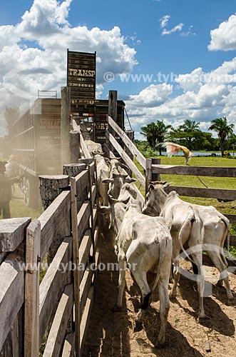 Assunto: Gado sendo transportado por caminhão próximo ao pantanal do Rio Abobral / Local: Mato Grosso do Sul (MS) - Brasil / Data: 11/2011