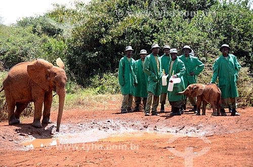 Assunto: Elefantes africano (Loxodonta africana) orfãos do Projeto da ONG The David Sheldrick Wildlife Trust no Parque Nacional de Nairobi / Local: Nairobi - Quênia - África / Data: 09/2012