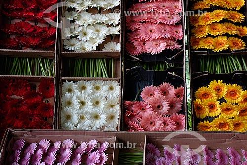 Assunto: Flores de Gerberas à venda no Centro de Abastecimento do Estado da Guanabara (CADEG) / Local: Benfica - Rio de Janeiro (RJ) - Brasil / Data: 07/2013