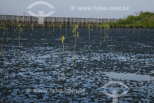 Replantio de área de mangue ao lado do antigo Aterro de Gramacho  - Duque de Caxias - Rio de Janeiro - Brasil