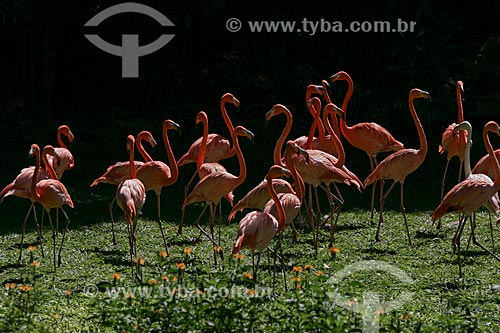 Vista de Flamingos  - Rio de Janeiro - Rio de Janeiro - Brasil