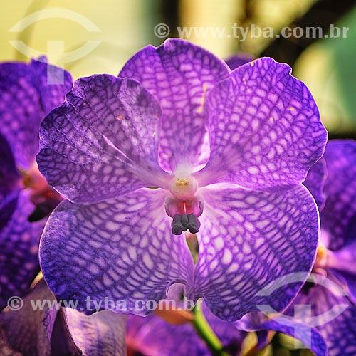 Assunto: Detalhe de Orquídea no Palmengarten - Jardim do século XIX é um complexo de 22 hectares / Local: Frankfurt - Alemanha - Europa / Data: 08/2013