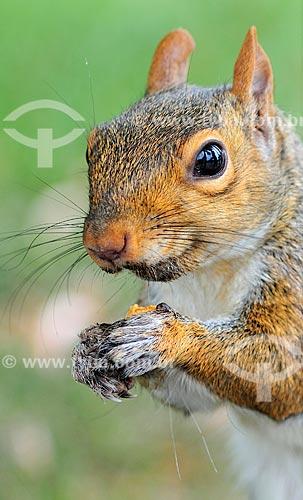 Assunto: Esquilo / Local: Washigton DC - Estados Unidos da América (EUA) - América do Norte / Data: 08/2013