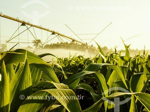 Assunto: Irrigação de plantação de milho / Local: Holambra - São Paulo (SP) - Brasil / Data: 12/2013