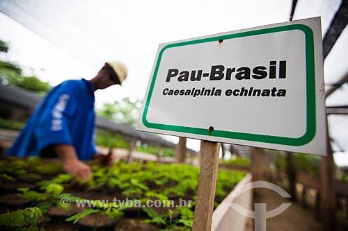 Assunto: Mudas de Pau-Brasil (Caesalpinia echinata) - Programa de Responsabilidade Socioambiental da Usina Hidrelétrica Santo Antônio, Consórcio Santo Antônio Civil (CSAC) / Local: Porto Velho - Rondônia (RO) - Brasil / Data: 10/2013
