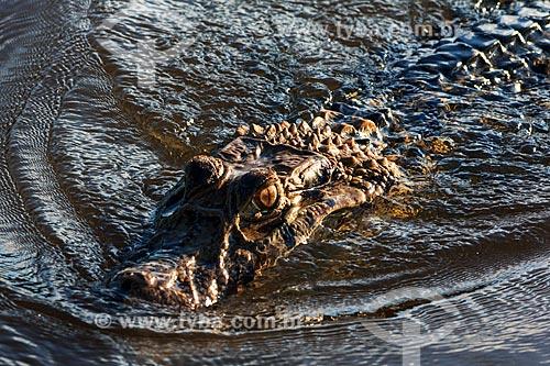 Assunto: Vista de um jacaré no Vale do Guaporé / Local: Rondônia (RO) - Brasil / Data: 08/2013