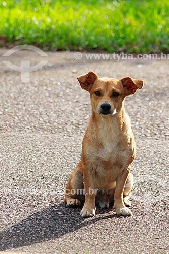 Assunto: Cão abandonado que vive na Usina Hidrelétrica de Samuel / Local: Candeias do Jamari - Rondônia (RO) - Brasil / Data: 11/2013