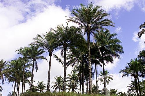 Assunto: Dendezeiro (Elaeis guineensis) / Local: Bahia (BA) - Brasil / Data: 04/1991