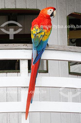 Assunto: Arara-vermelha (Ara chloropterus) - também conhecida como araracanga ou arara-macau - pousada no barco / Local: Porto Velho - Rondônia (RO) - Brasil / Data: 03/2012