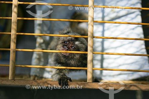 Centro de Triagem de Animais Silvestres do IBAMA - CETAS  - Seropédica - Rio de Janeiro - Brasil