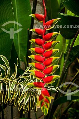 Assunto: Flor da Heliconia (Heliconia rostrata) / Local: Niterói - Rio de Janeiro (RJ) - Brasil / Data: 12/2013