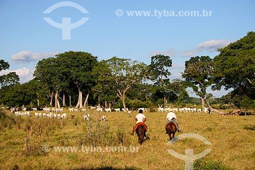 Assunto: Vaqueiro pastoreando gado no Pantanal / Local: Mato Grosso do Sul (MS) - Brasil / Data: 04/2008