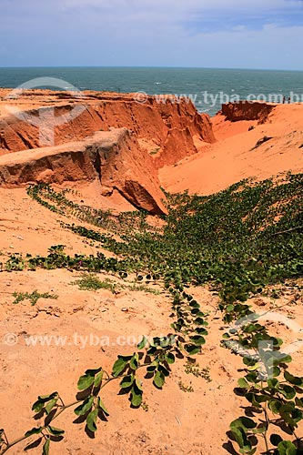 Assunto: Falésias na praia de Canoa Quebrada / Local: Aracati - Ceará (CE) - Brasil / Data: 02/2014