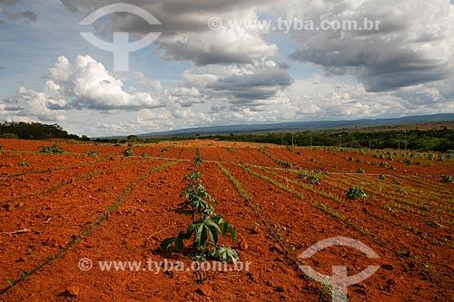 Assunto: Plantação de mamona no entorno da chapada diamantina / Local: Bahia (BA) - Brasil / Data: 04/2013