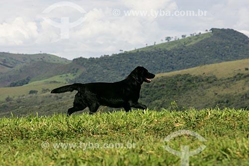 Assunto: Cachorro no Vale do Matutu / Local: Aiuruoca - Minas Gerais (MG) - Brasil / Data: 12/2006