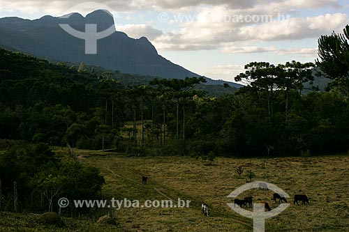 Assunto: Vista geral do Parque Estadual da Serra do Papagaio / Local: Aiuruoca - Minas Gerais (MG) - Brasil / Data: 06/2007