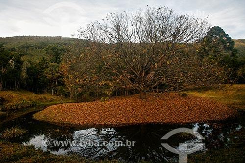 Assunto: Árvore sem as folhas no Vale do Matutu / Local: Aiuruoca - Minas Gerais (MG) - Brasil / Data: 06/2010