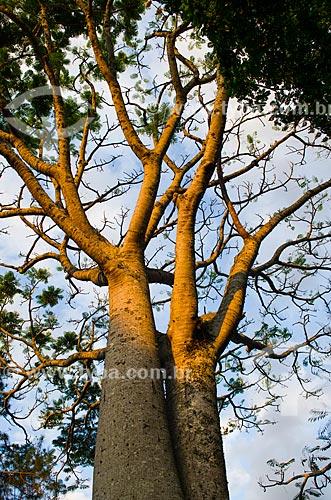 Assunto: Vista de Paineira - Ceiba Speciosa / Local: Chapada dos Guimarães - Mato Grosso (MT) - Brasil / Data: 07/2013