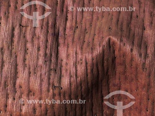 Assunto: Detalhe de casca de Araucária (Araucaria angustifolia) / Local: Canela - Rio Grande do Sul (RS) - Brasil / Data: 04/2014