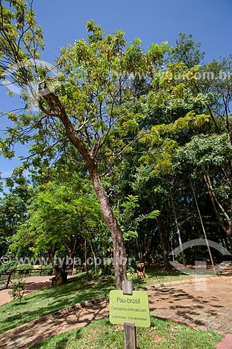 Assunto: Pau-Brasil (Caesalpinia echinata Lam.) no Bosque dos Buritis / Local: Goiânia - Goiás (GO) - Brasil / Data: 05/2014