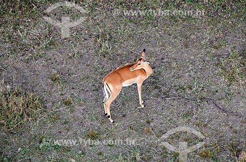 Assunto: Vista aérea de Impala (Aepyceros melampus) na Reserva Nacional Masai Mara / Local: Vale do Rift - Quênia - África / Data: 09/2012