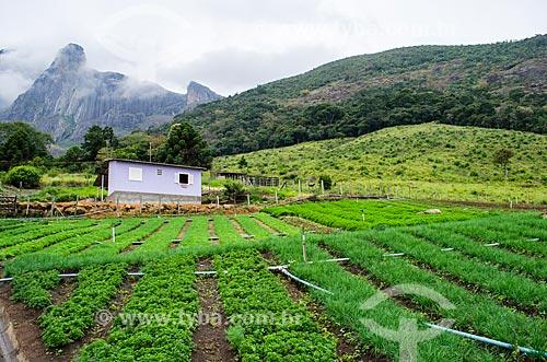 Assunto: Plantação de hortaliças próximo ao Parque Estadual dos Três Picos / Local: Distrito de Bonsucesso - Teresópolis - Rio de Janeiro (RJ) - Brasil / Data: 05/2014