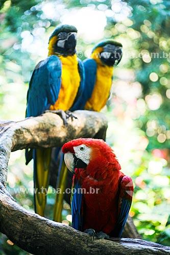 Assunto: Araras no Parque das Aves / Local: Foz do Iguaçu - Paraná (PR) - Brasil / Data: 05/2008