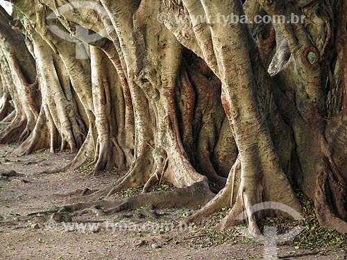 Assunto: Árvores na Praça Padre Gregório de Nadal - também conhecida como Praça do Arvoredo / Local: Porto Alegre - Rio Grande do Sul (RS) - Brasil / Data: 04/2014