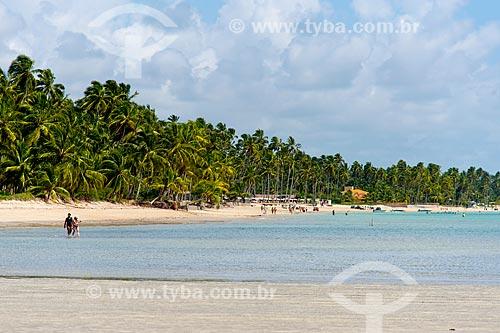 Assunto: Coqueiros na Praia Ponta de Mangue / Local: Maragogi - Alagoas (AL) - Brasil / Data: 12/2013