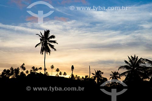 Assunto: Coqueiros na Praia de Camacho / Local: Maragogi - Alagoas (AL) - Brasil / Data: 12/2013
