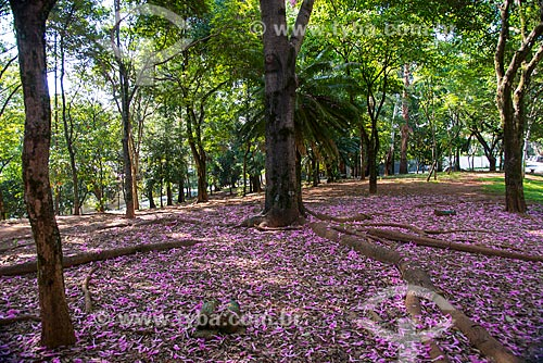 Assunto: Árvores na Praça Rafael Sapienza - Vila Madalena / Local: Pinheiros - São Paulo (SP) - Brasil / Data: 03/2014