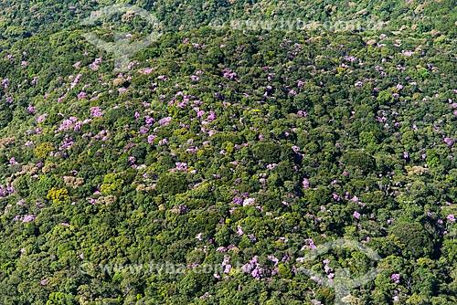 Foto aérea de Mata Atlântica na região de São Lourenço da Serra  - São Lourenço da Serra - São Paulo (SP) - Brasil