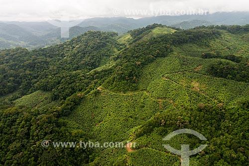 Plantação de bananas em encosta de morro na Serra do Cafezal  - Miracatu - São Paulo (SP) - Brasil