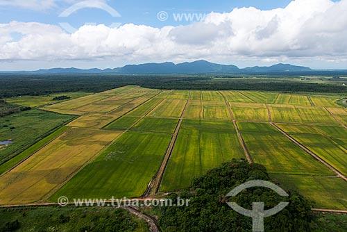 Plantação de arroz na zona rural de Iguape  - Iguape - São Paulo (SP) - Brasil