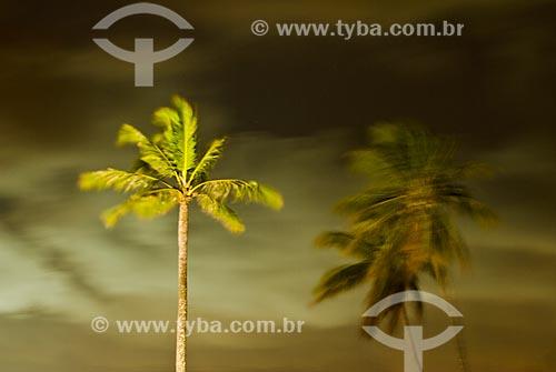 Vista noturna de coqueiros na praia de Porto de Galinhas  - Ipojuca - Pernambuco (PE) - Brasil