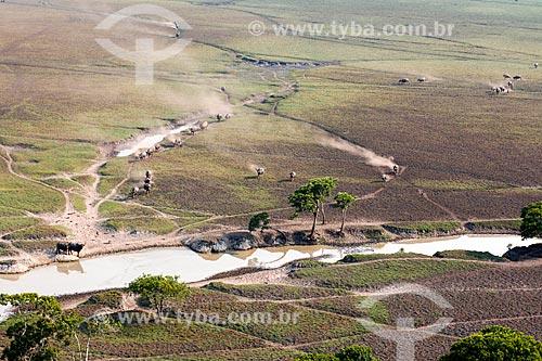 Manada de búfalos às margens do Rio Guaporé proximo à Fazenda Pau DÓleo e da Reserva Biológica do Guaporé  - São Francisco do Guaporé - Rondônia (RO) - Brasil