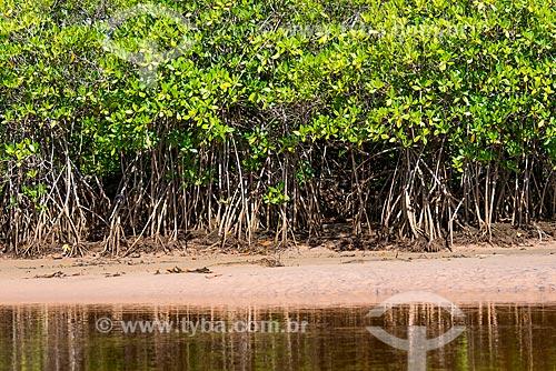 Manguezal na Praia de Algodões  - Maraú - Bahia (BA) - Brasil